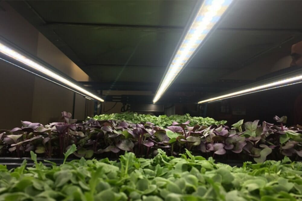 vertical farming, LED grow lights, vertical farming research