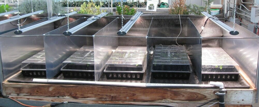 University of Georgia and Fluence Bioengineering have partnered in a horticulture lighting research project to determine the effects of greenhouse supplemental lighting on yield. Using Fluence LED grow lights to supplement natural greenhouse lighting and measure its effects on root and shoot weight.