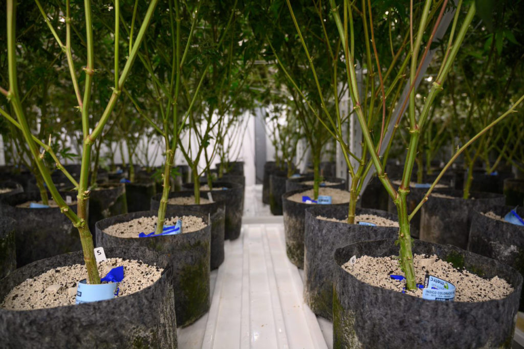 Substrate is an important consideration for plant growth and development